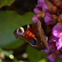 Бабочка :: Mariya Zazerkalnaya