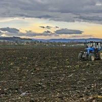 Утро в поле :: Александр Гурьянов