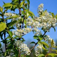 Запах весны :: Владимир Буев