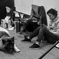На выставке собак... :: Ира Егорова :)))
