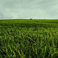 Трава, трава у дома. :: Эмиль Абд