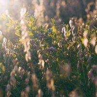 Урожай :: Evgenija Enot