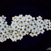 Цветочки :: Наталья Ткачёва