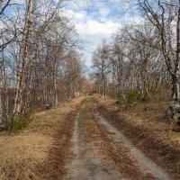 Лесная дорожка!!! :: Олег Кулябин