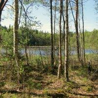 В майском лесу. :: Валентина Жукова