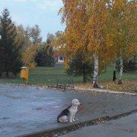 Одиночество :: Владимир