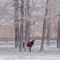 Одинокая лошадь :: Оксана Арискина