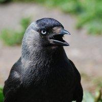иду, сама с собой разговариваю... :: linnud