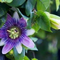 Какой-то красивый тропический цветок:) :: Виктор М