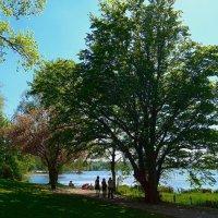 Отдых на озере Альстер майским днём :: Nina Yudicheva