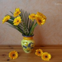 Жёлтые герберы в вазе :: Nina Yudicheva