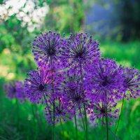 Цветок :: Станислав Лазарев