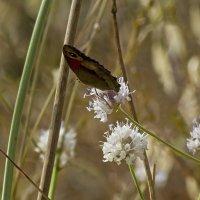 Две параллельные прямые и бабочка... :: Shmual Hava Retro