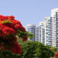 Тель авив дома и деревья :: Александр Деревяшкин