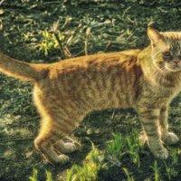 кот Рыжий :: павел бритшев