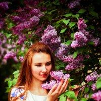 Сирень душистая с весною расцвела :: Арина Зотова