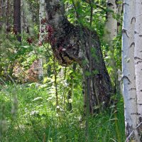 В лесу :: Вера Щукина