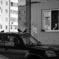 Мгновения весны :: Катерина Дмитриева