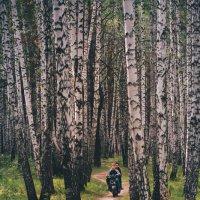 Лесная трасса :: Андрей Липов