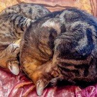 Мой коты :: Владимир KVN