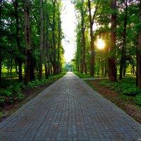 Дорожка в парке :: °•●Елена●•° Аникина♀