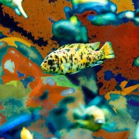 Рыба :: MVMarina