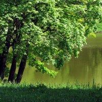 Зелёный май... :: Ирина Румянцева
