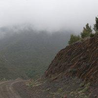 уходя в туман... :: Светлана marokkanka