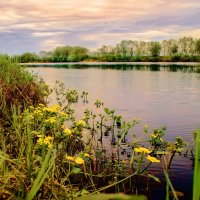 Весеннее цветение :: Виктор Заморков