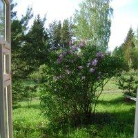 Окно в май №1 :: Марина Домосилецкая