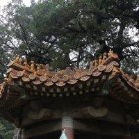 Пекин, Императорский сад :: Сергей Смоляр