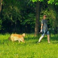 Кто в лес, кто по дрова :: Albina