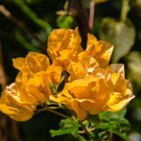 Цветы :: Witalij Loewin