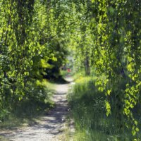 Зеленый коридор. :: Сергей Адигамов