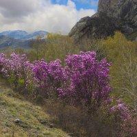 Весной в горах Алтая :: И.В.К. ))