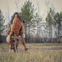 Конь трава лес :: Марина Влади-на