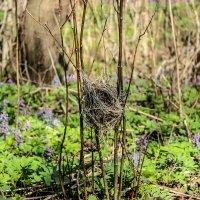 Гнездо :: Алена Сизова