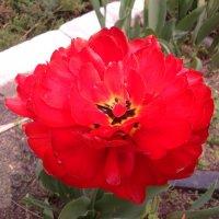 Аленький цветок ! :: Татьяна ❧