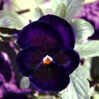 Космический цветок :: Natalia Babukh