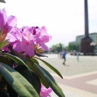 Цветы на площади :: Лина Свиридова