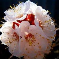 Цветок :: Марья Шубина