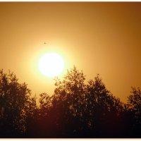 Солнцестояние. :: Мила Бовкун