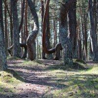 Танцующий лес :: Виктория Титова