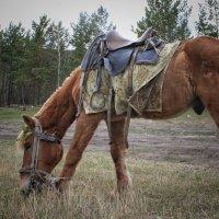 Конь на поляне :: Марина Влади-на