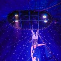 Под куполом цирка :: Андрей Липов