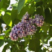 Майские цветы :: Aнна Зарубина