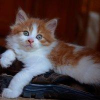 Сторожевой кот на посту :: Александр Бойко