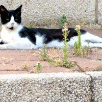 Длинный кот! :: Герович Лилия