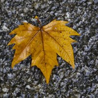 Осенний лист :: Alex Molodetsky