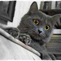 а? что? еда? :: Natalia Mihailova